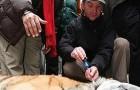 Непал использует спутниковые технологии для слежения за редким тигром